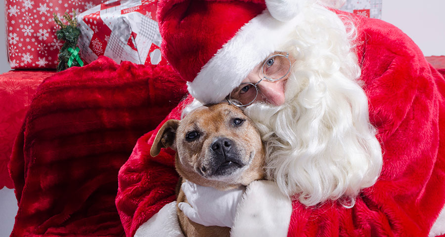 Santa Paws, Dog Portrait with Santa